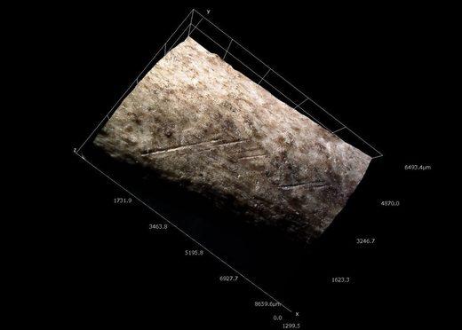 Modelo tridimensional de marcas de corte en el hueso distal de un cisne. Qesem Cave. Ruth Blasco
