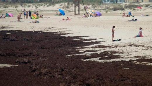 Estado de una playa de Tarifa el pasado verano invadida por el alga asiática - Efe