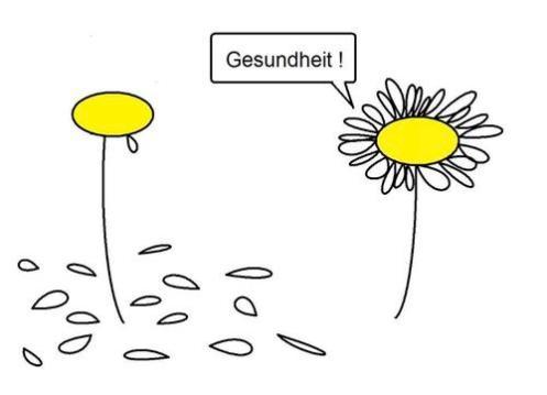 las plantas estornudan