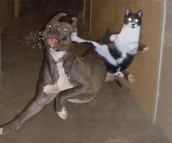 Gato......Madre!
