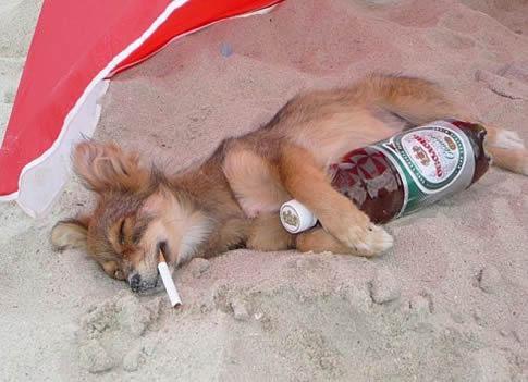 Que corra el alcohol!