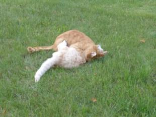 berlin_timmy&pepe_cats