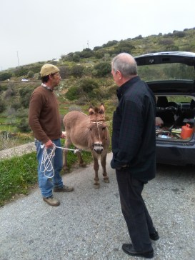 Helping catch a donkey, Andros, Greece
