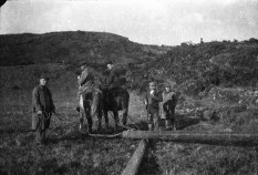 Horses and donkeys, often on hire from local farmers, were used to move the massive electricity poles in steeper rural areas
