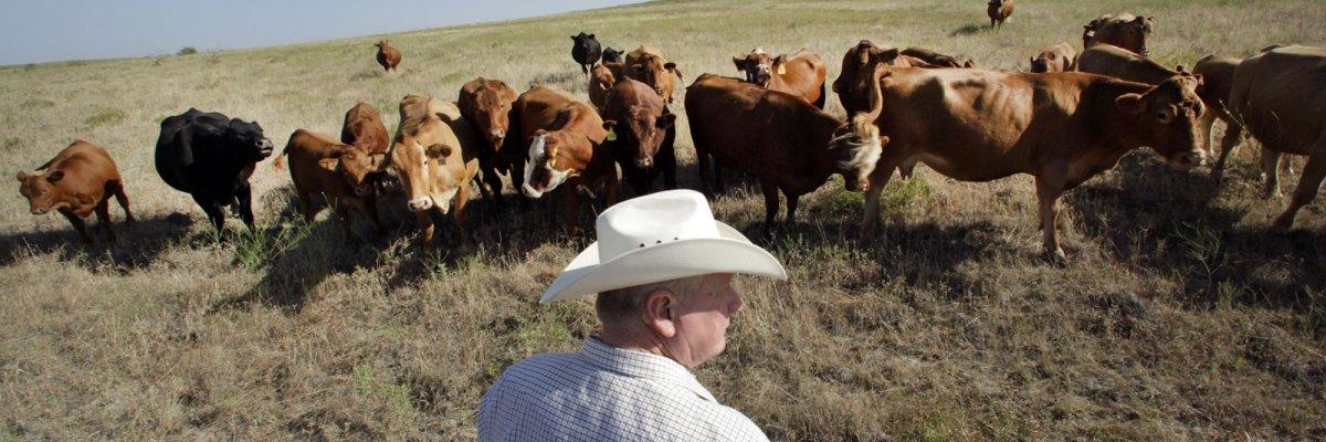 #Irónico: Los rancheros de Texas que apoyaron a Trump son las primeras víctimas de su guerra económica contra México