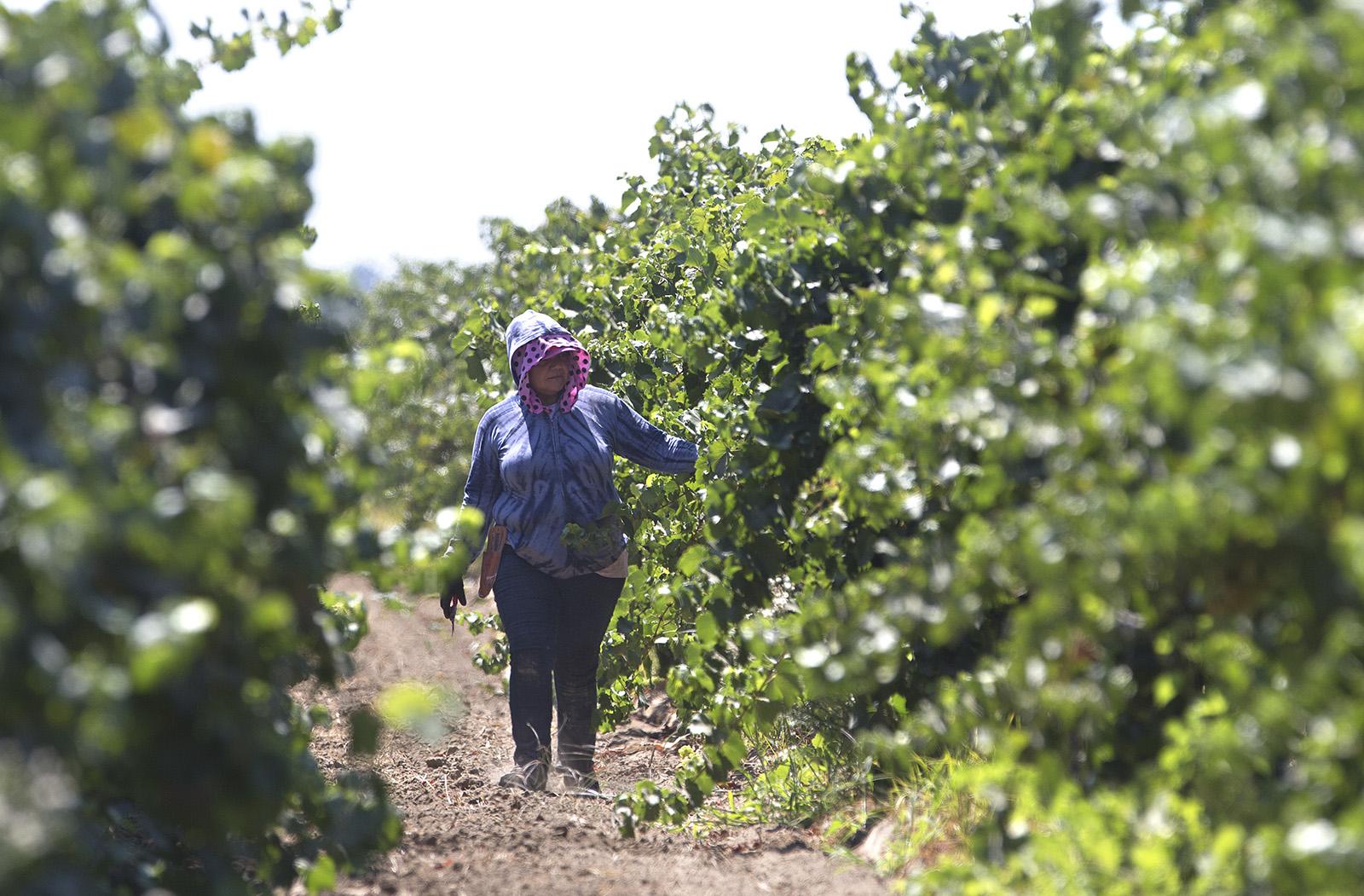 Trabajadores inmigrantes en el campo