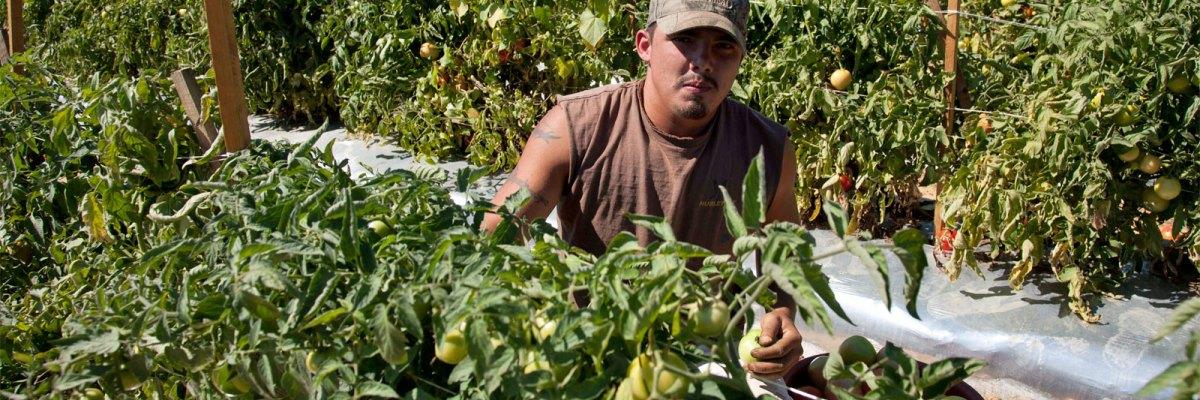 """#PaisaPower: Empresario desiste de emplear estadounidenses, porque solo """"los mexicanos hacen el trabajo"""""""