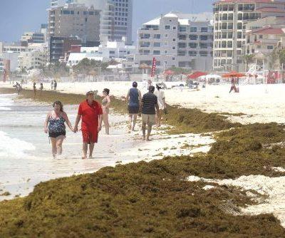 Las playas mexicanas enfrentan el mayor sargazo de la historia (FOTOS)