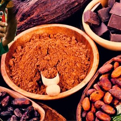 Cacao chiapaneco es reconocido como uno de los mejores del mundo