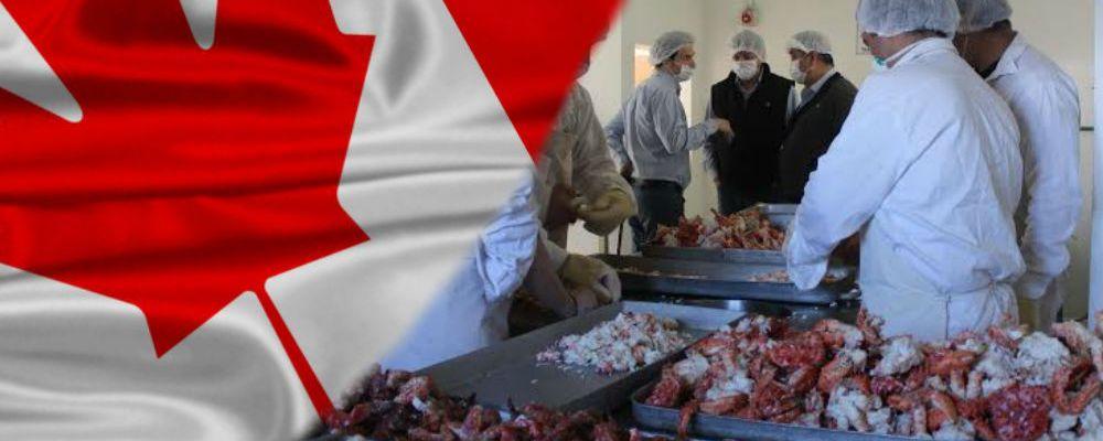 En Canadá buscan mexicanos que quieran ganar 33 mil pesos al mes