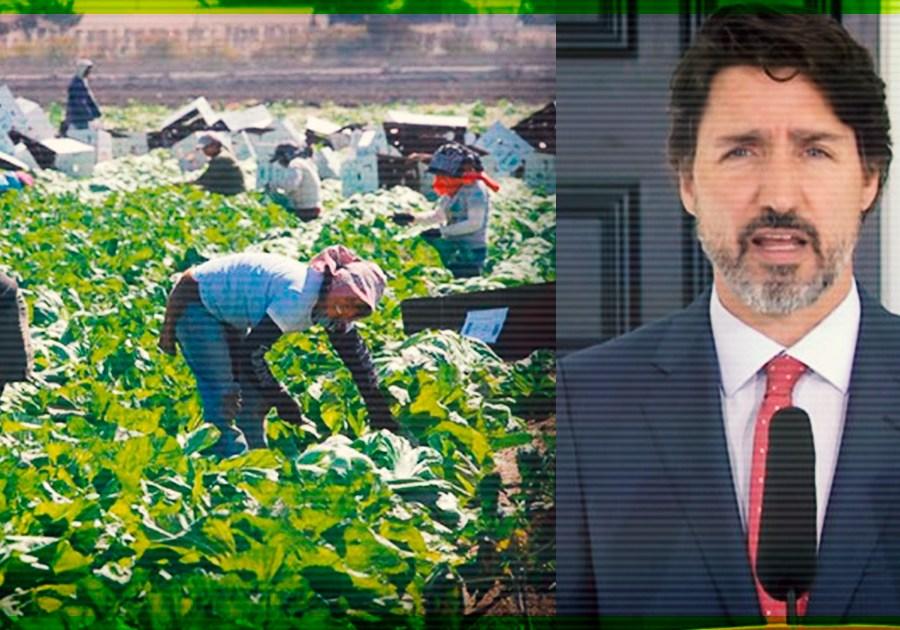 Canadá concedería nacionalidad canadiense a trabajadores extranjeros