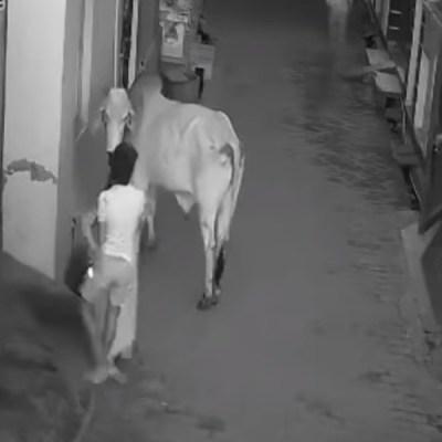 #EsViral Niño salva a su abuelita de un toro que la embistió