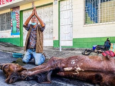 Abuelito llora por la muerte de su fiel caballo y amigo Trenecito
