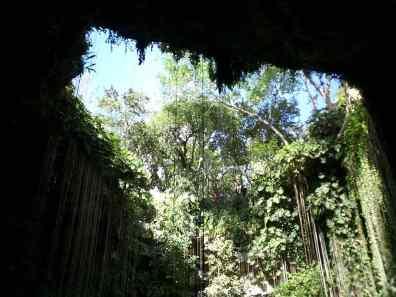 cenote azul sagrado desde abajo