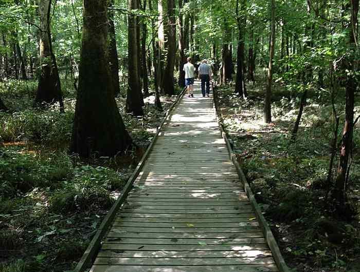 El parque nacional de Congaree en los Estados Unidos