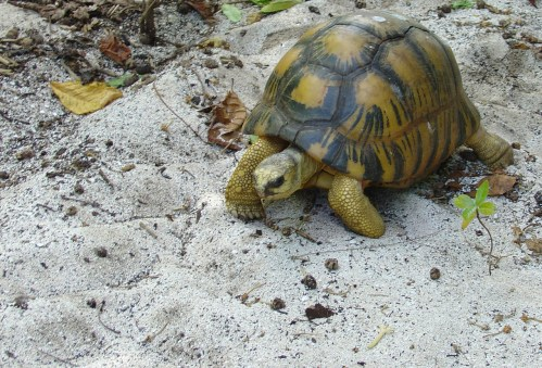 Tortuga Seychelles