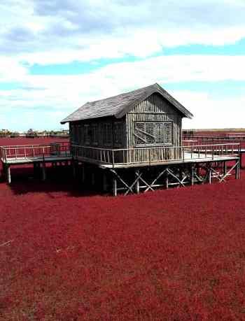 playa roja de panjin