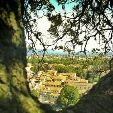 Vistas desde la Torre Guinigi