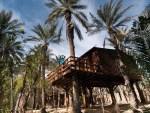 cabane dans les palmiers