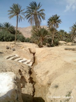 el guettar oasis irrigation