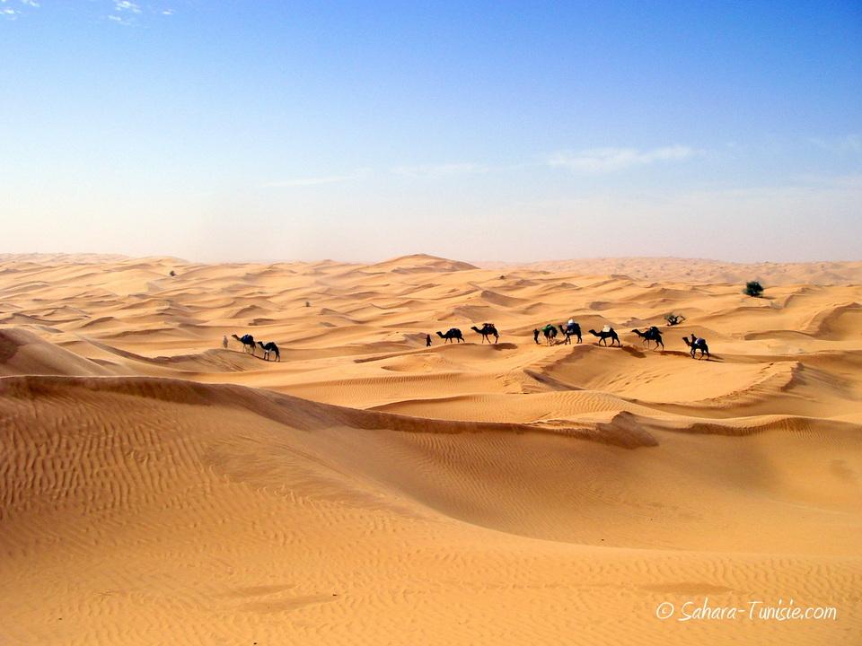 méharée désert tunisien