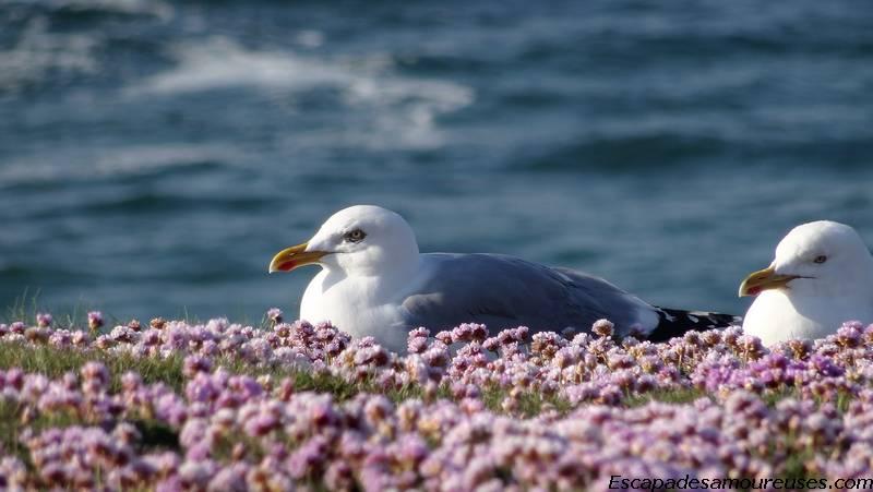 Quiberon : la mer à perte de vue