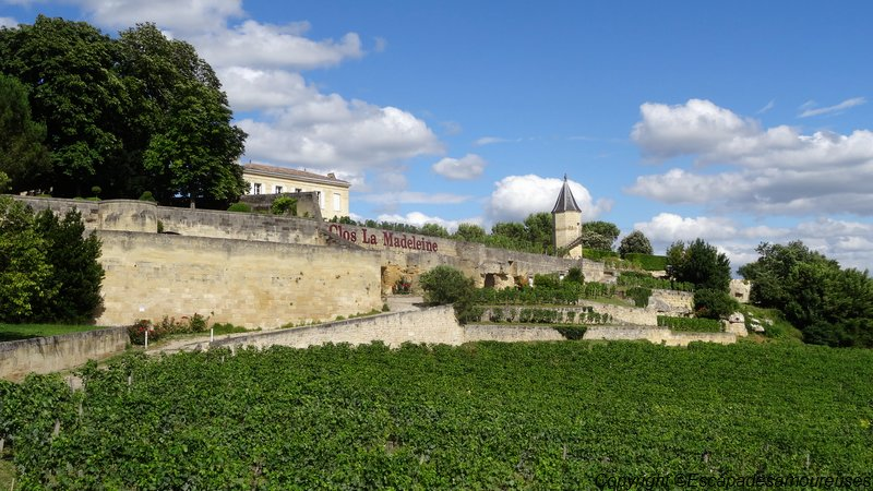 saintemilion11