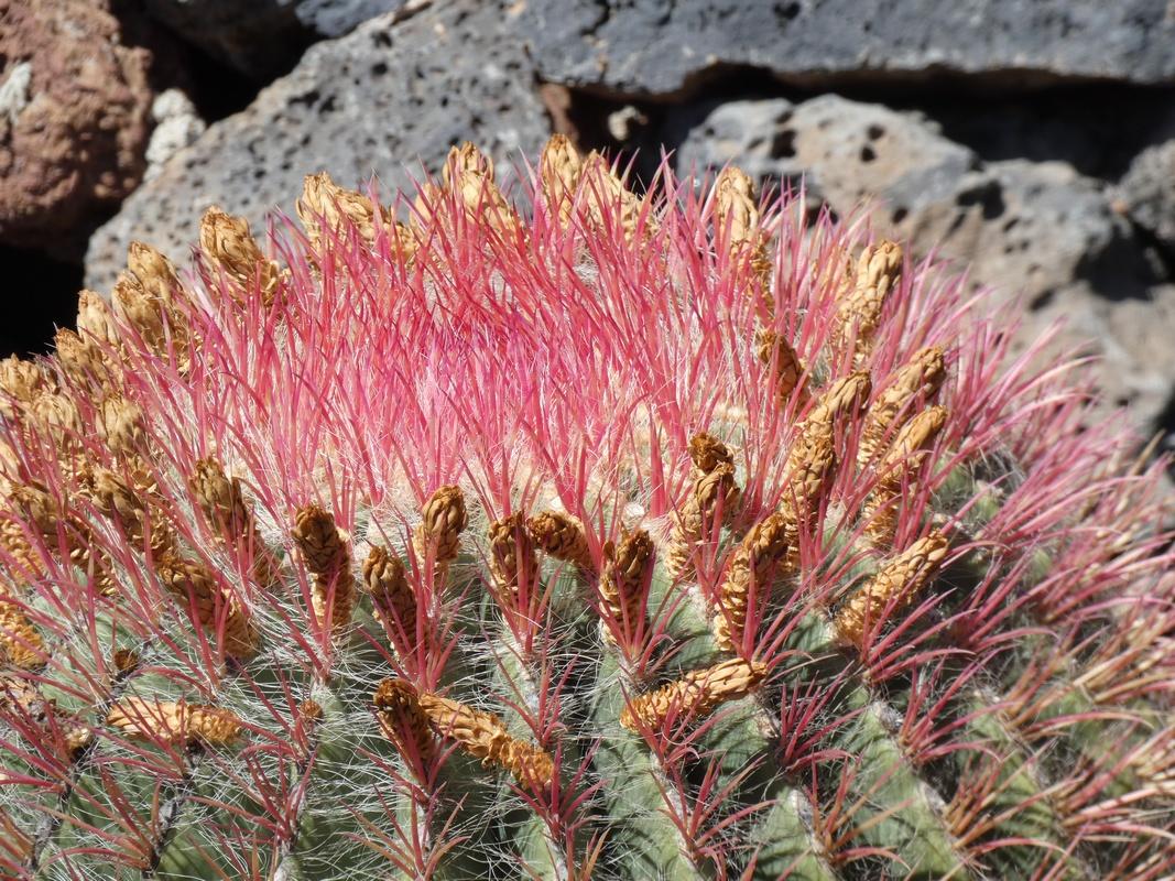 Lanzarote jardin de cactus escapades amoureuses