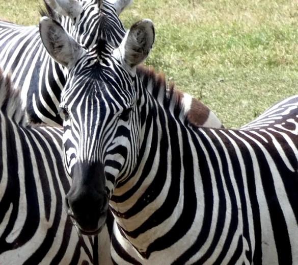 voyage au kenya lac nakuru escapades amoureuses