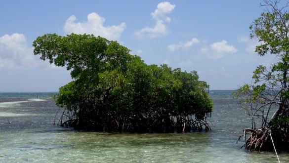 Guadeloupe Grand cul de sac marin îlet caret escapades amoureuses