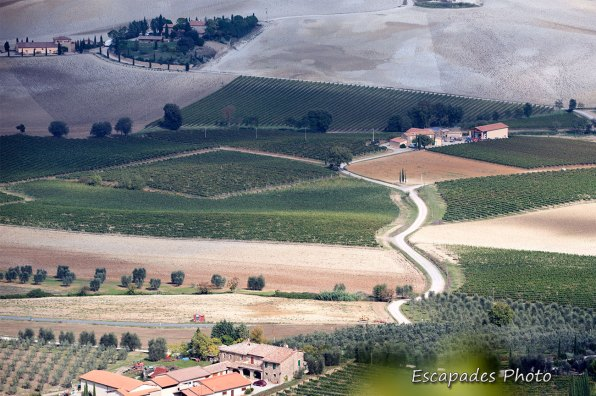 DCS_5828orcia