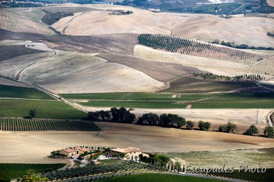 DCS_5830orcia