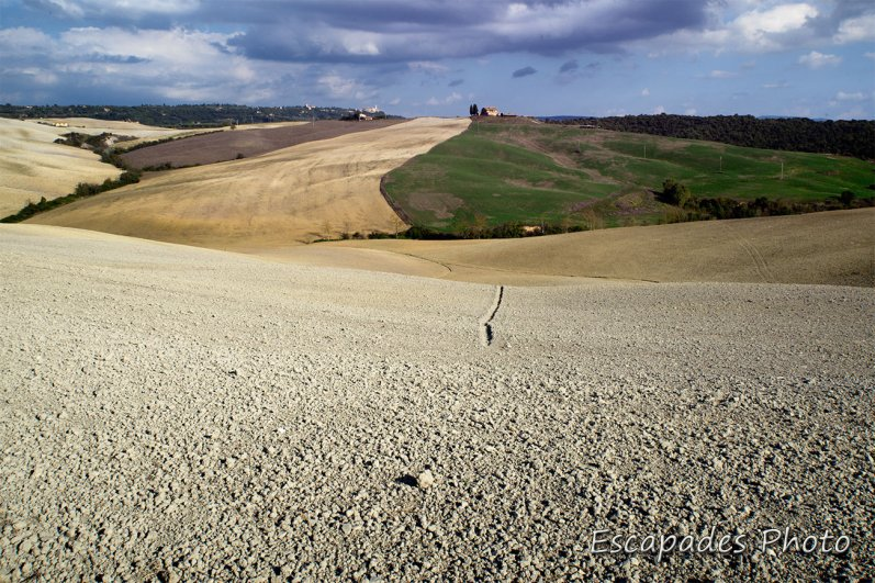 DCS_5896orcia
