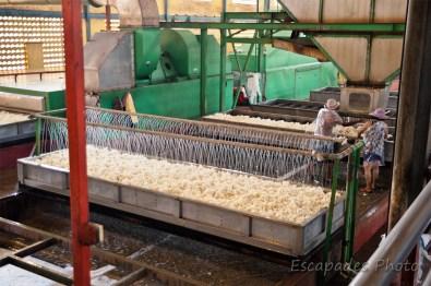 Usine de caoutchouc de Chup - ouvriers au travail