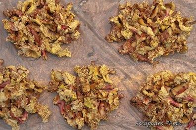 fleurs séchées - marché de luang namtha