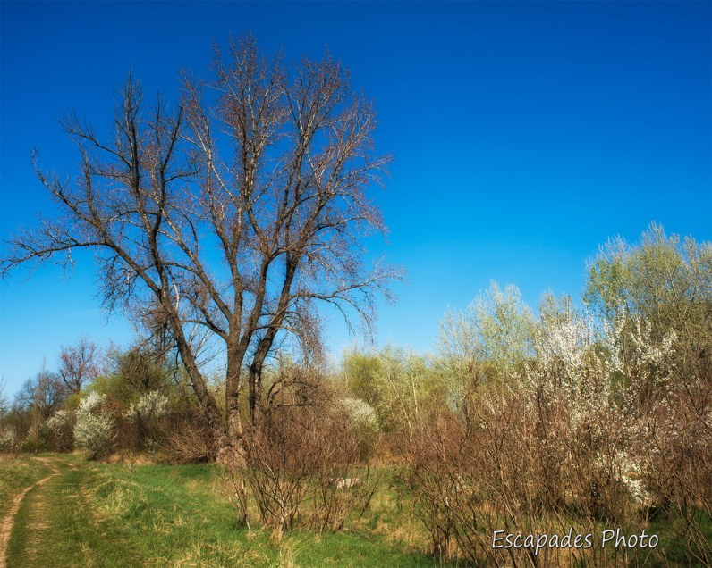 Rives de la rivière Mureș