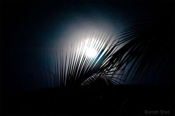 Rives du Mékong : Nuit d'encre et clair de lune