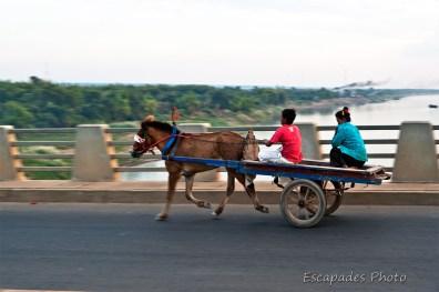 Petits chevaux sur le pont Kizuna