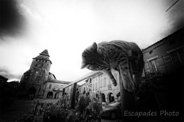 Le chat facétieux de Labastide d'Armagnac