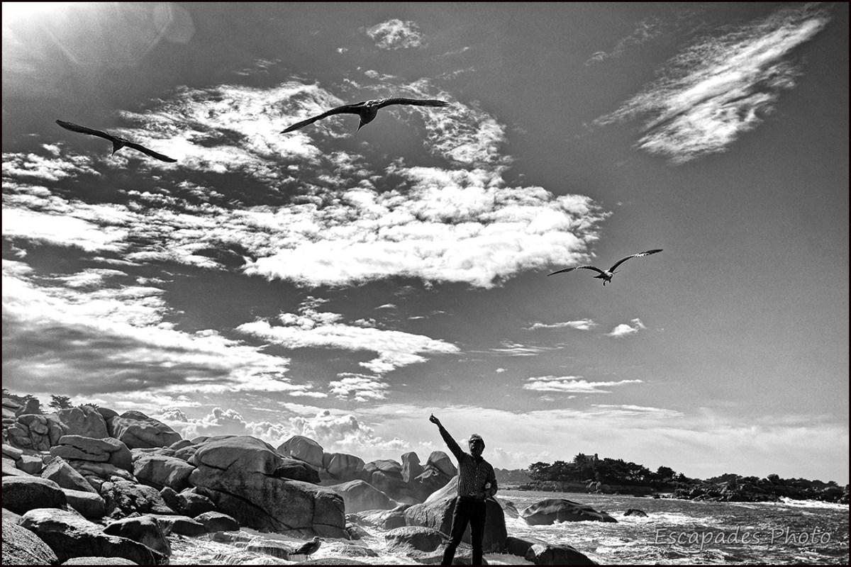 Ploumanac'h grand site naturel : L'homme aux goélands