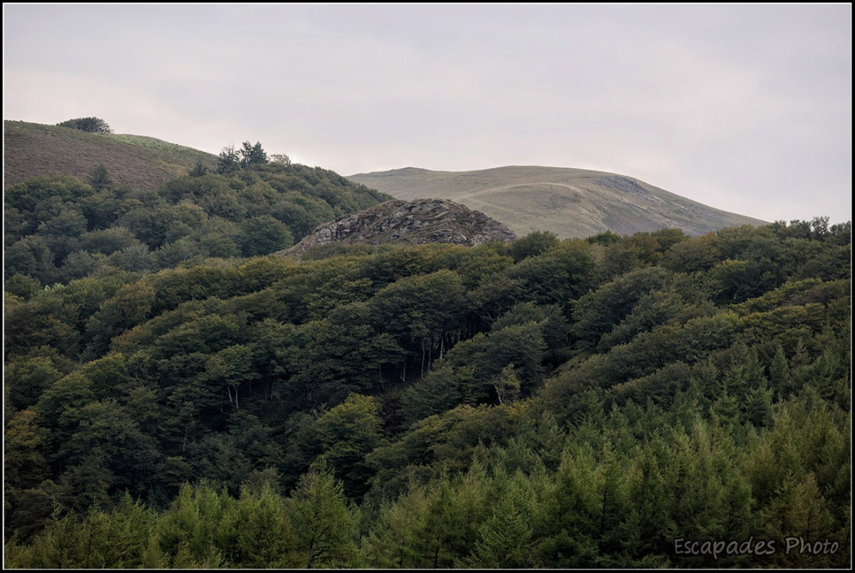 Col de Roncevaux forêts de pin, de feuillus et pâturages