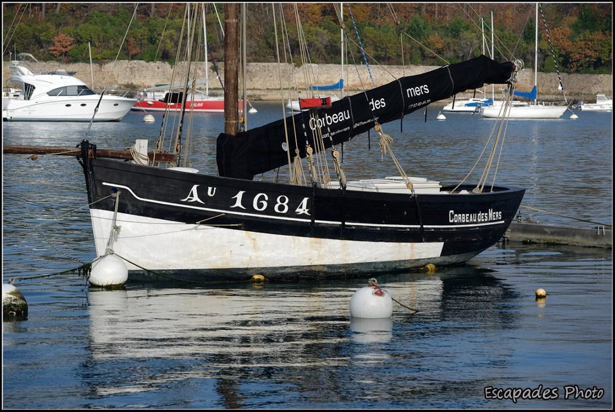 corbeau des mers en mouillage à Port Anna