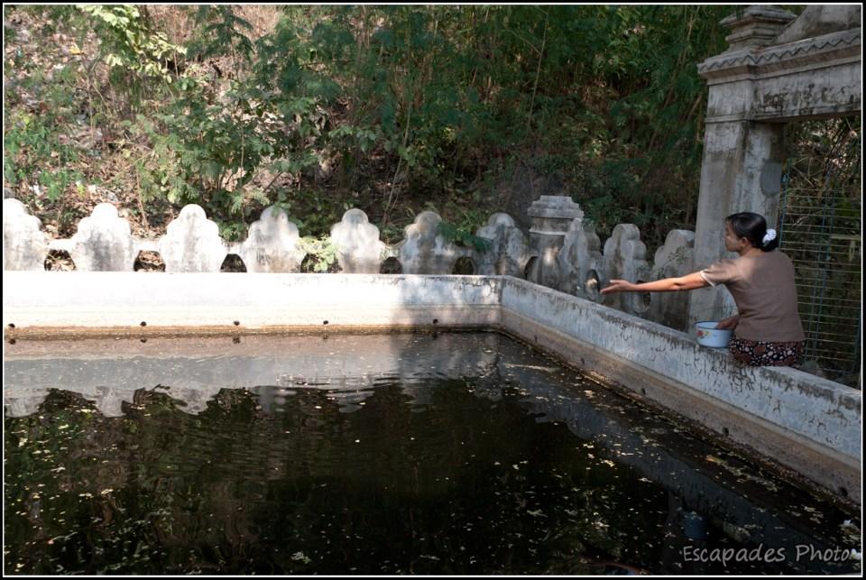Sagaing - Offrande dans un bassin sacré