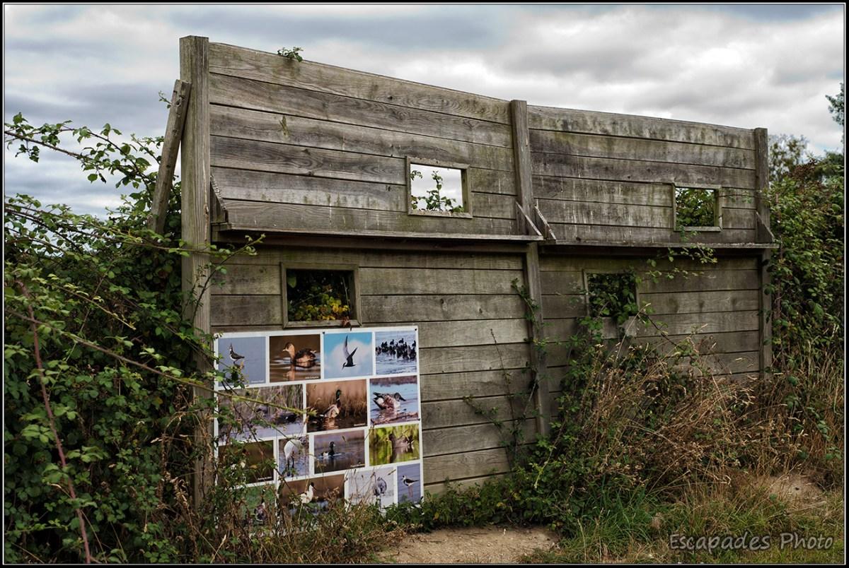 île d'Arz : Palissade d'observation dans la ronceraie