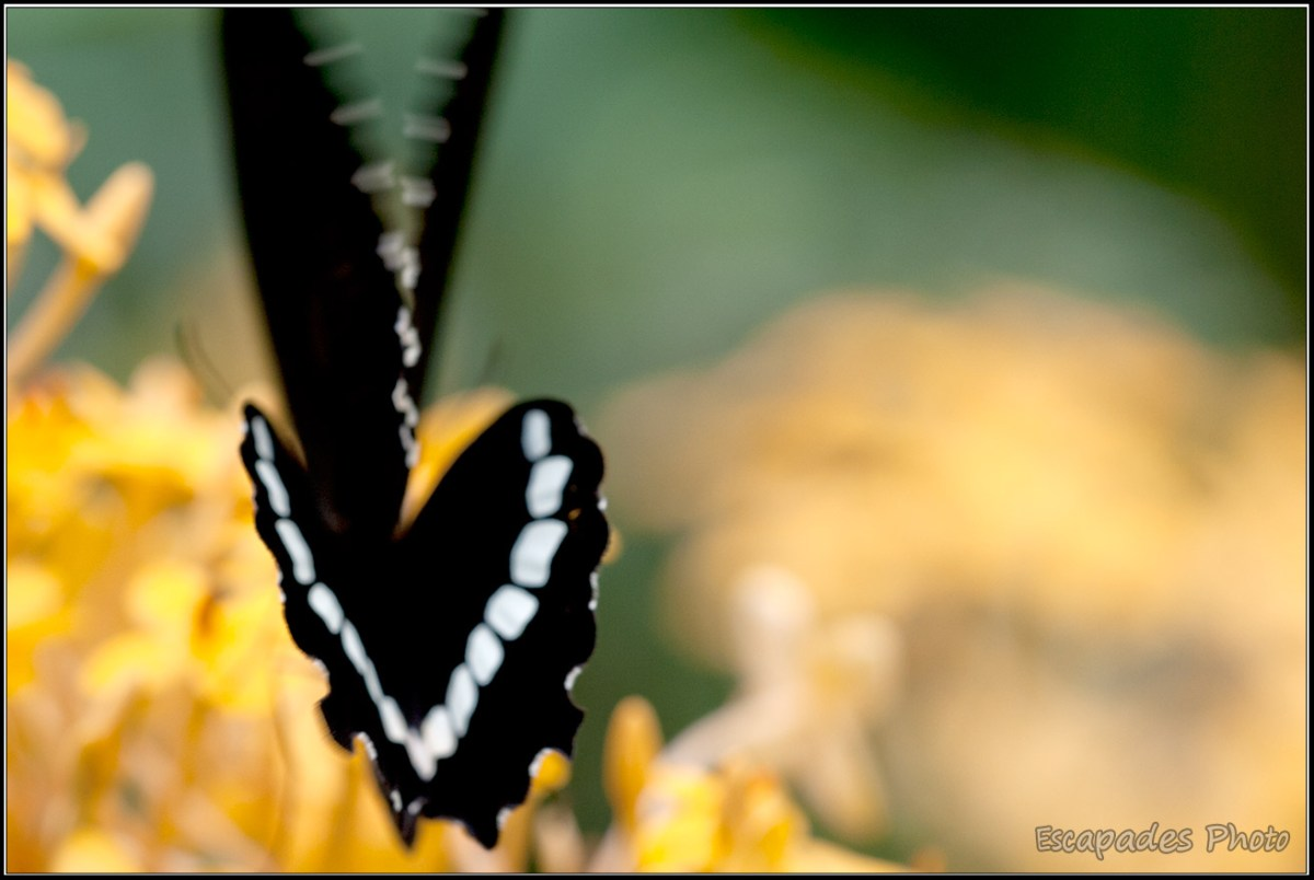 Vol de Papillon Butterfly Park de Kuala Lumpur
