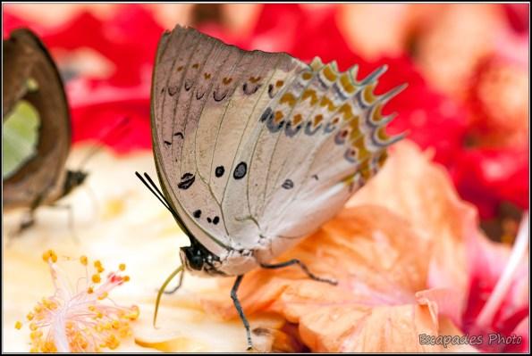 Butterfly Park Kuala Lumpur : papillons et libellules