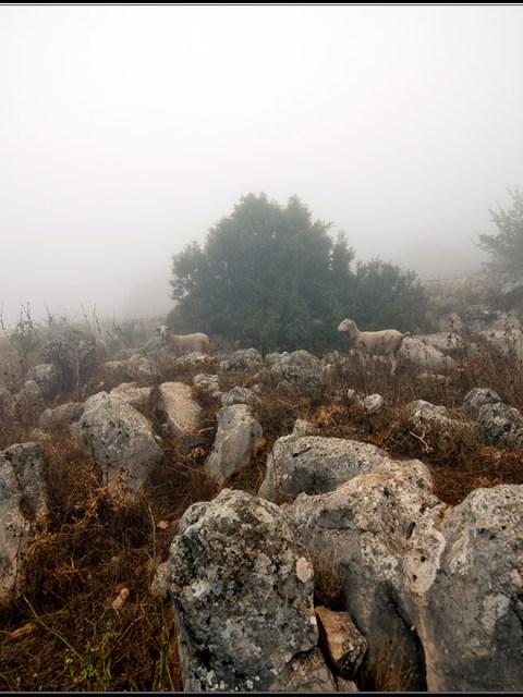 Brouillard sur El Torcal