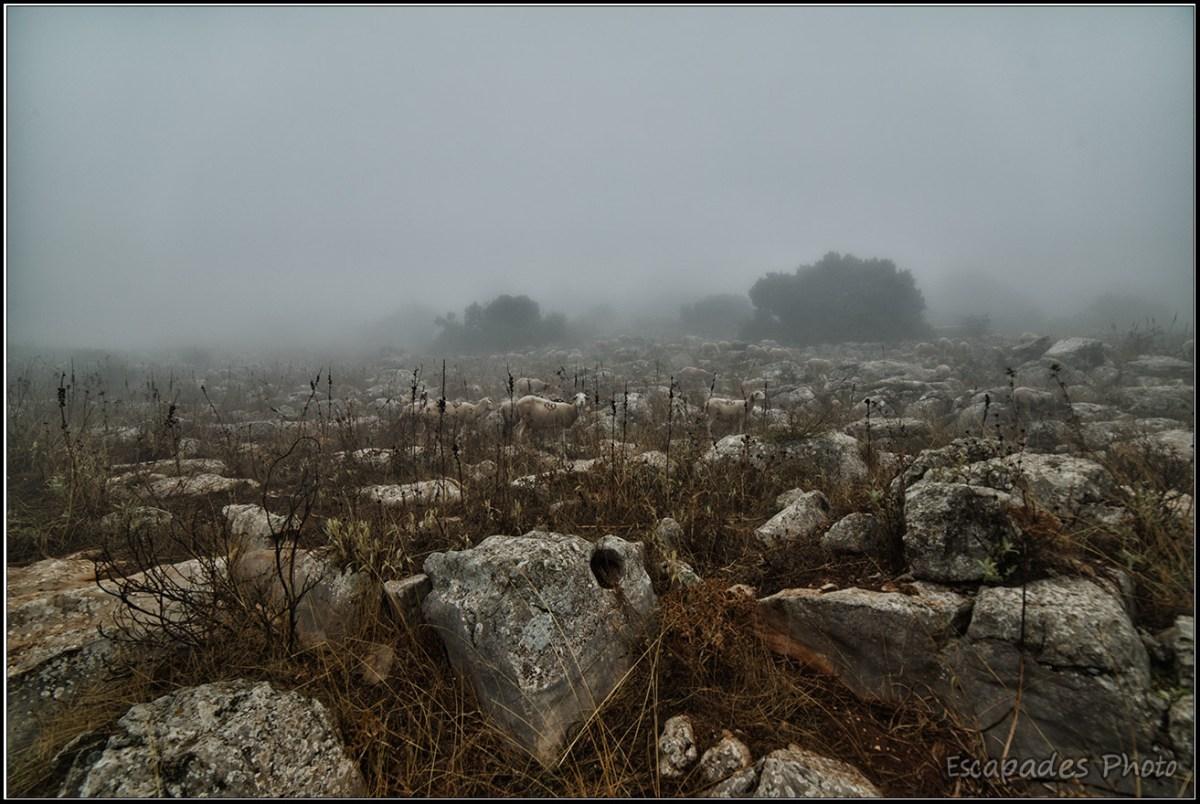 El Torcal de Antequera, moutons dans le brouillard