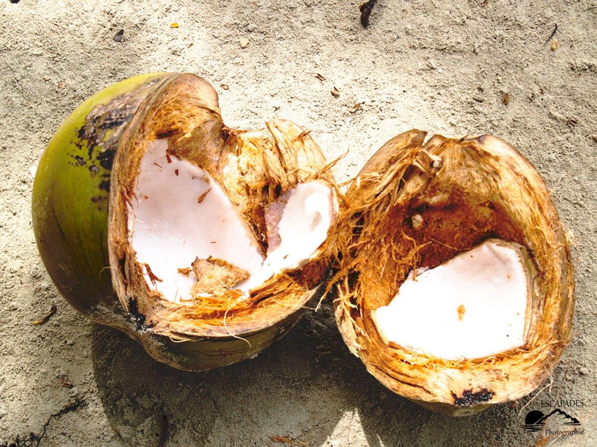 El Nido Palawan - noix de coco