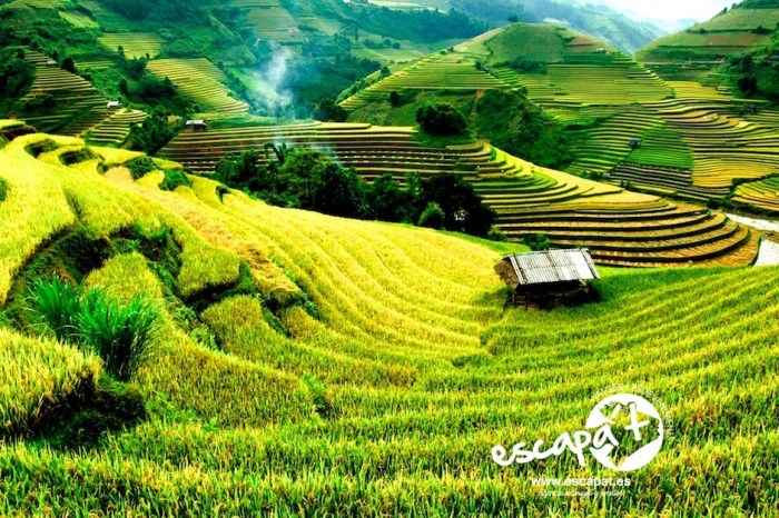 Bali Select – Indonesia